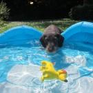 Spaß mit Pool